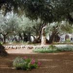 garden_of_gethsemane_day_4_medium