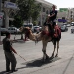 camel_for_hire_day_5_medium